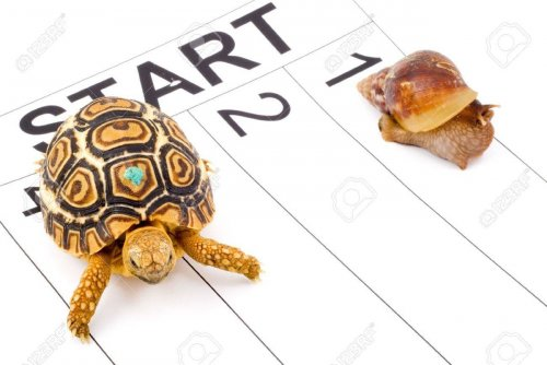 2954228-a-tortoise-competing-with-a-snail-in-a-runnig-race.jpg